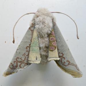greyflowermoth-1