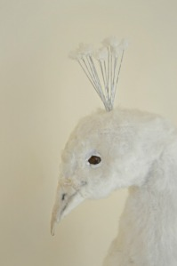 Whithe peacock (fragmento)