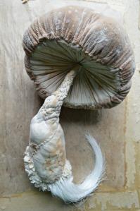 Specimen-mushroom-small